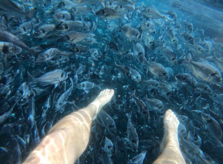 Plivanje s ribama